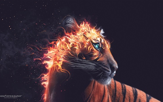 Wallpaper Tiger look back, fire, beast, Desktopography art design