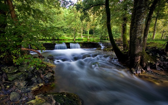 Обои Деревья, лес, камни, ручей, мох, лето природа