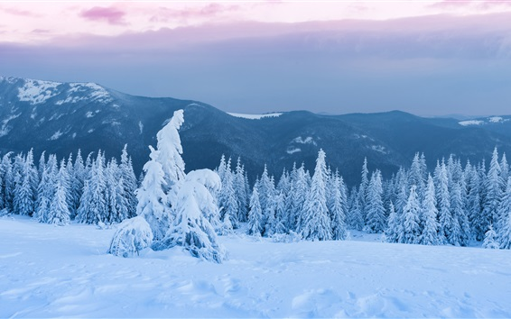 Wallpaper Trees, forest, thick snow, dusk, winter