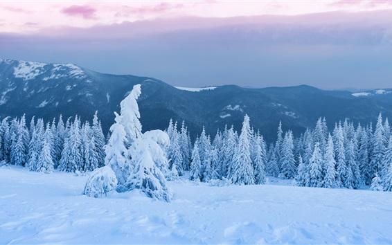Fondos de pantalla Árboles, bosque, nieve gruesa, anochecer, invierno