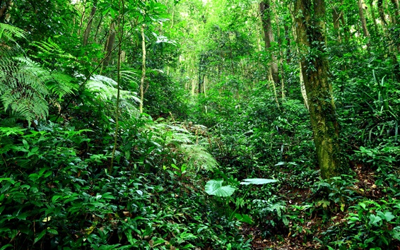 Wallpaper Tropical forest, jungle, bushes, grass, trees, green