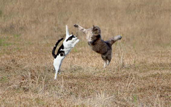 Wallpaper Two cats jumping in the grass