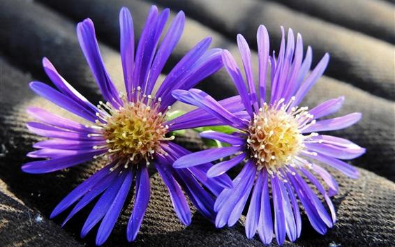 壁紙 2つの紫色の花、花びら、雌しべ