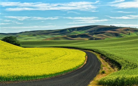 Wallpaper Wheat and rape field, country road, countryside, Palouse, USA