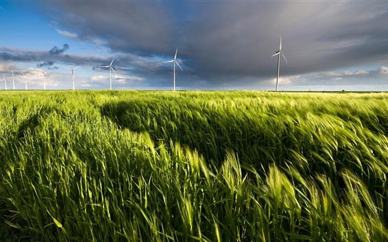 Wallpaper Wheat field, windmills, summer