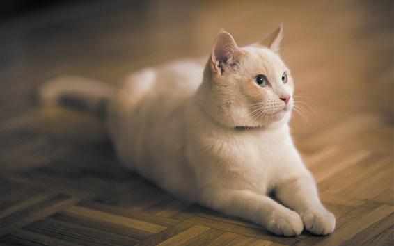 Fondos de pantalla Gato blanco permanecer en el suelo