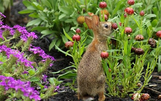 Fond d'écran Lapin sauvage, fleurs