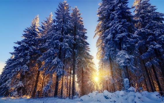 Fond d'écran Hiver, neige, forêt, arbres, soleil, rayons
