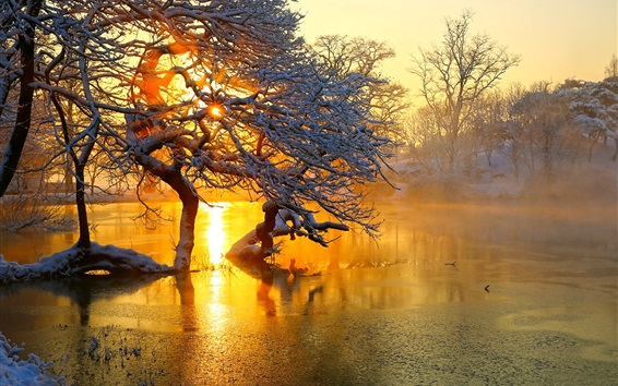 Wallpaper Winter, trees, pond, sunrise, snow, morning, fog
