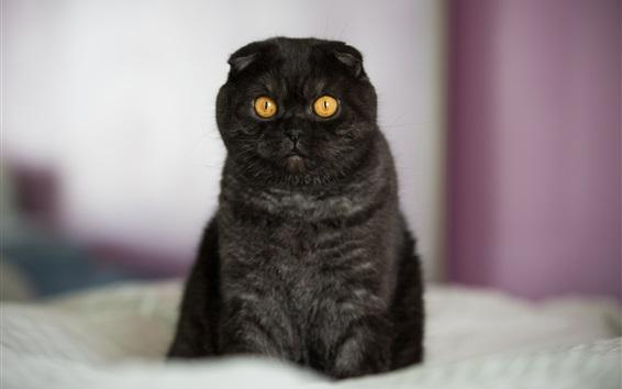 Wallpaper Yellow eyes black kitten at bed