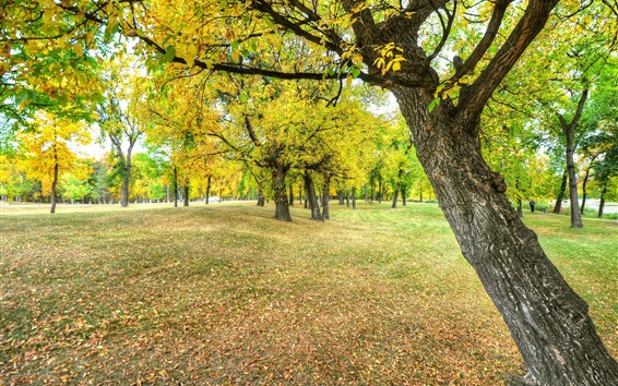 Wallpaper Autumn, park, trees, leaves, ground