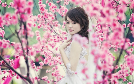Wallpaper Beautiful Asian girl, bride, spring, cherry flowers
