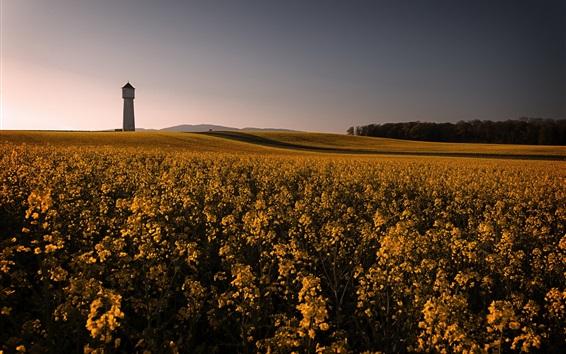 Обои Красивое поле рапса, желтые цветы, маяк