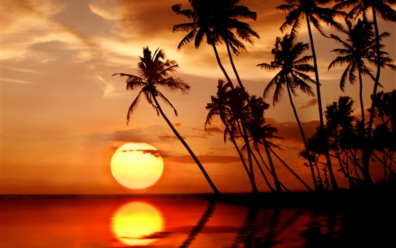 Wallpaper Beautiful tropical sunset, palm trees, sea, beach