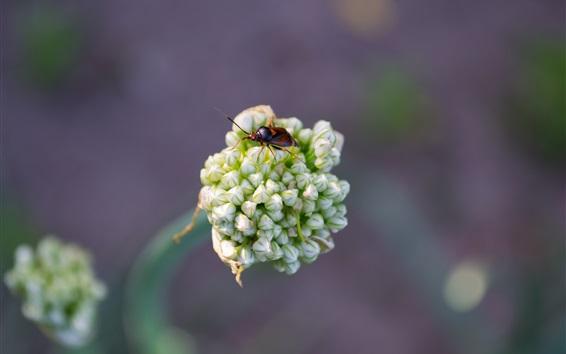 Papéis de Parede Besouro e flor