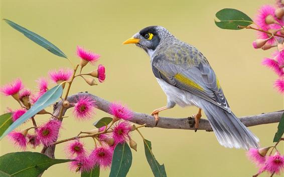 Обои Птица, розовые цветы, веточки, весна
