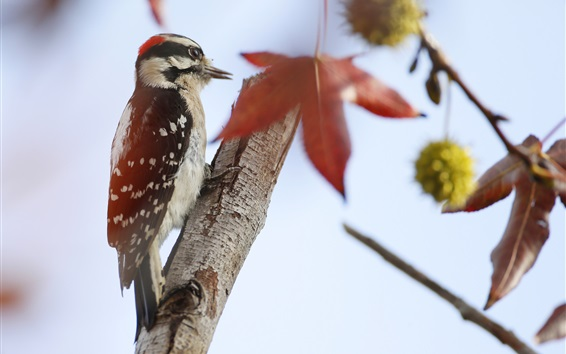Обои Птица, дятел, дерево