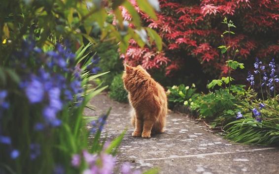 Papéis de Parede Marrom, gato, olhar, costas, caminho, parque
