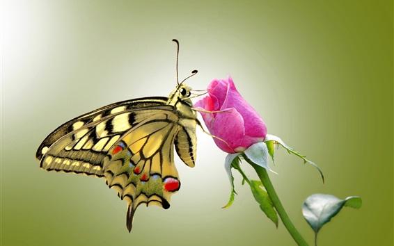 Обои Бабочка и розовые розы