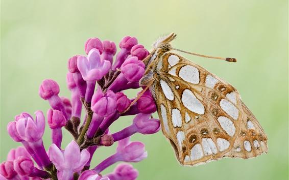 Wallpaper Butterfly, moth, wings, pink flowers