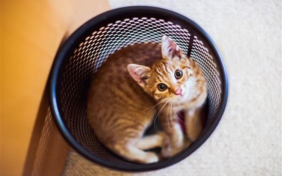 Wallpaper Cat in the waste paper bucket