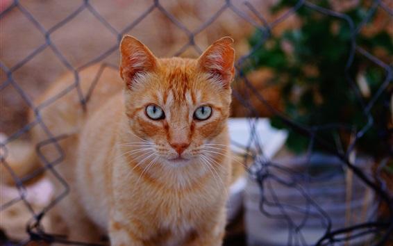 Wallpaper Cat, mustache, fence