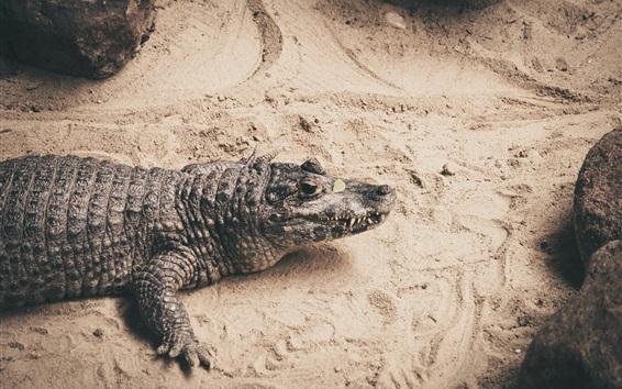 Papéis de Parede Crocodilo, fotografia de répteis
