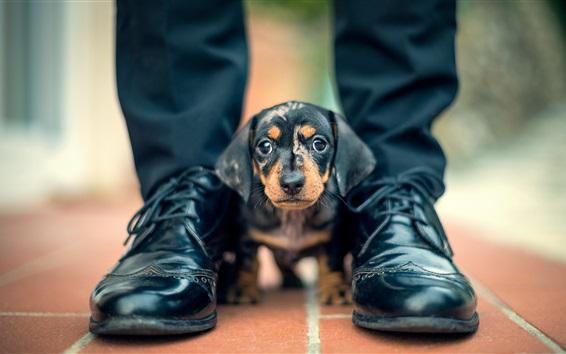배경 화면 귀여운 검은 개, 발