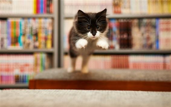 Обои Милый котенок прыжки