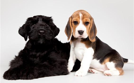 Papéis de Parede Filhotes de cachorro bonitos, pretos e manchados