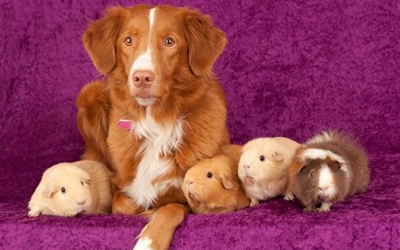 Papéis de Parede Cães e cobaias