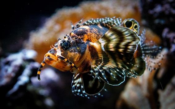 Papéis de Parede Peixe subaquático, aquário