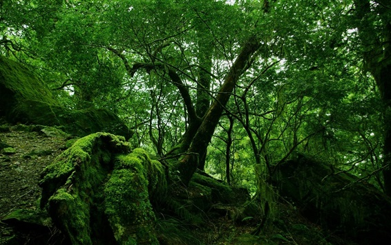 Wallpaper Forest, trees, green, moss, dusk