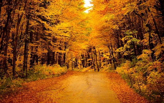 Wallpaper Golden autumn, road, trees, yellow leaves