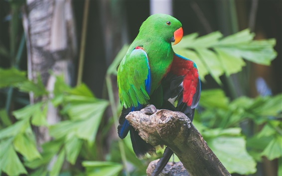 Wallpaper Green feathers parrot, birds photography