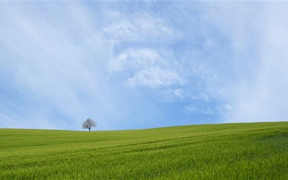 Wallpaper Green field, tree, blue sky, clouds