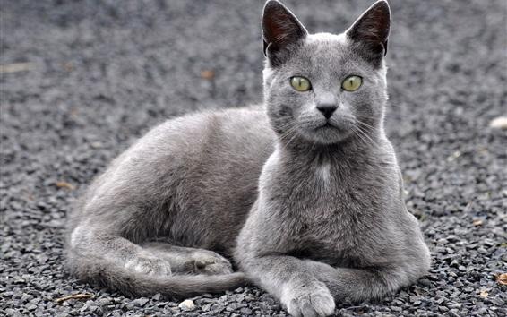 Fond d'écran Gris, chat, jaune, yeux, asseoir, repos