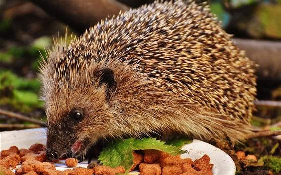 Papéis de Parede Hedgehog, comer, alimento