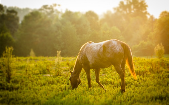 Wallpaper Horse, grass, sunshine