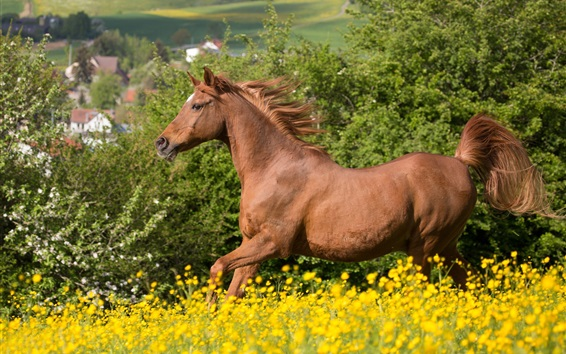 Wallpaper Horse running, brown mane, flowers
