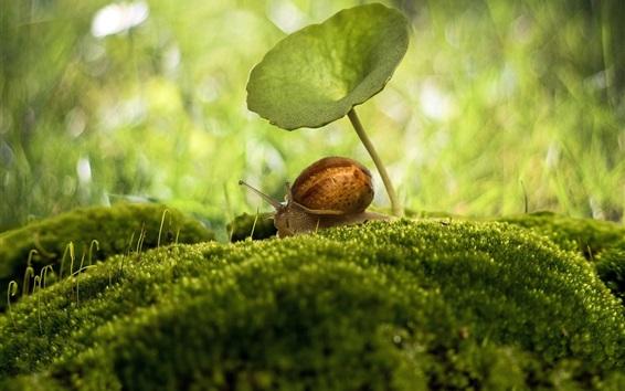Fond d'écran Insectes, macro, photographie, escargot, parapluie, mousse