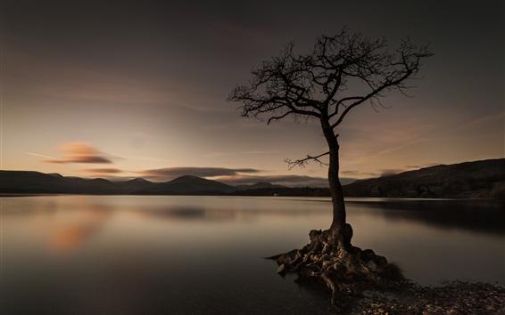 Wallpaper Lake, tree, evening