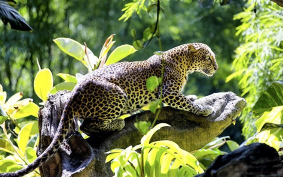 Papéis de Parede Leopardo, predador, folhas