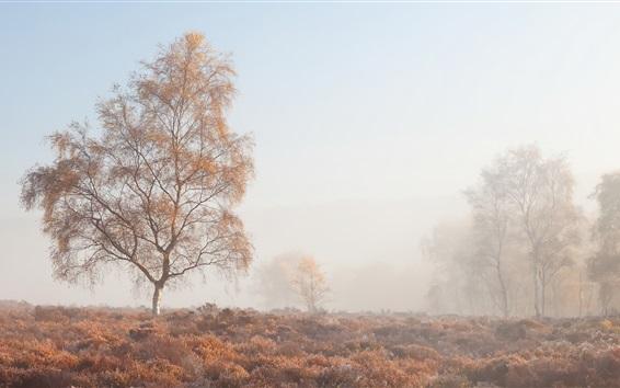Papéis de Parede Manhã, nevoeiro, árvores, grama, outono