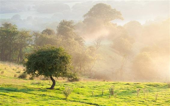 Обои Утренний пейзаж природа, туман, деревья, лето