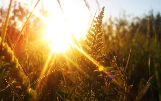 Fondos de pantalla Naturaleza, hierba, puesta del sol, deslumbramiento