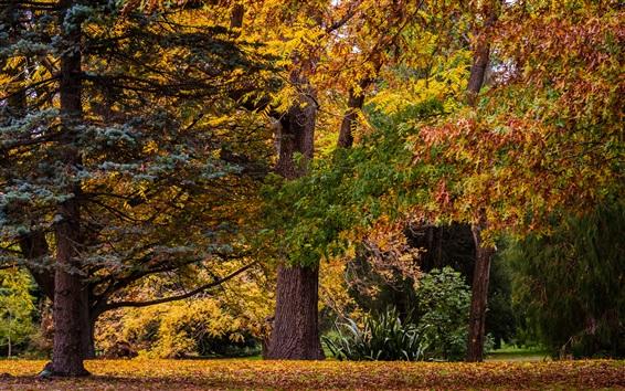 Wallpaper New Zealand, Christchurch, autumn, trees, forest