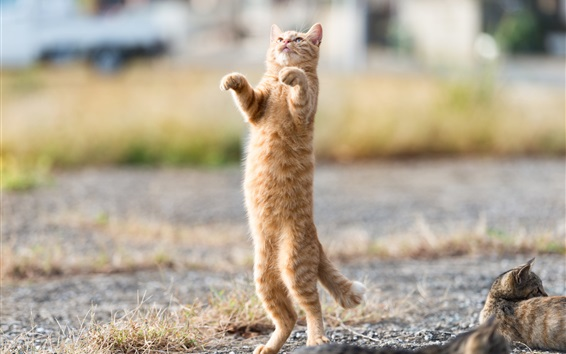Wallpaper Orange kitten standing