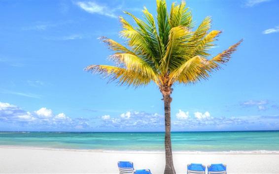 Papéis de Parede Palmeira, praia, mar, chaise, trópicos