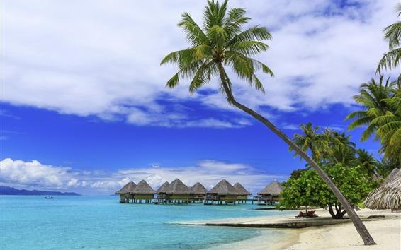 Fond d'écran Palmiers, été tropical, paradis, plage, mer, station